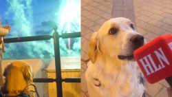 Diervriendelijk vuurwerk? Onze HLN-hond Fleur deed de test!