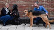 Valentijnsweekend voor Spaanse Honden in Nood