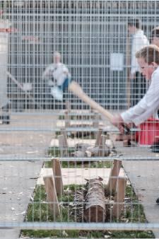 Bieleman René Hansen hakt het best een boom en wordt Gelders kampioen
