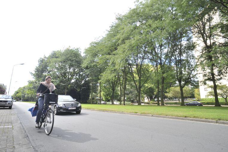 Gedaan met gevaarlijke verkeerssituaties voor fietsers: de Fruithoflaan krijgt een fietspad in de groene middenberm.