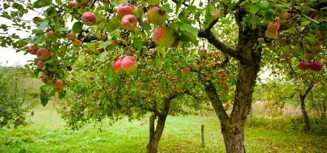 Plan voor fietsroute langs fruitbomen in Herpen