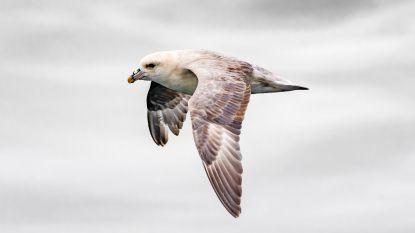 """Plastic gevonden in eieren van Canadese vogels: """"In Noordzee kan het nog dramatischer zijn"""""""