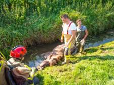 Brandweer redt paard uit de sloot in Oldebroek