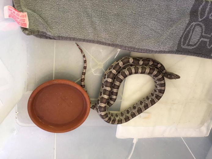De slang moest wel een nachtje opwarmen.