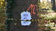 Uilekot en Climaxi stellen ANB en minister in gebreke voor bomenkap in Ravottersbos
