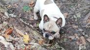 """Psychiatrische patiënt schopt hondje Rocky (10) dood in park: """"De 'hemel' droeg hem op mijn hondje dood te maken"""""""