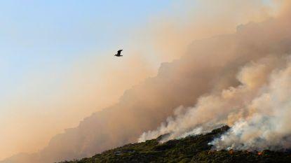 """""""Strijd tegen ontbossing moet ook in Afrika worden gevoerd"""": Reynders wil dat EU (strenge) positie inneemt"""