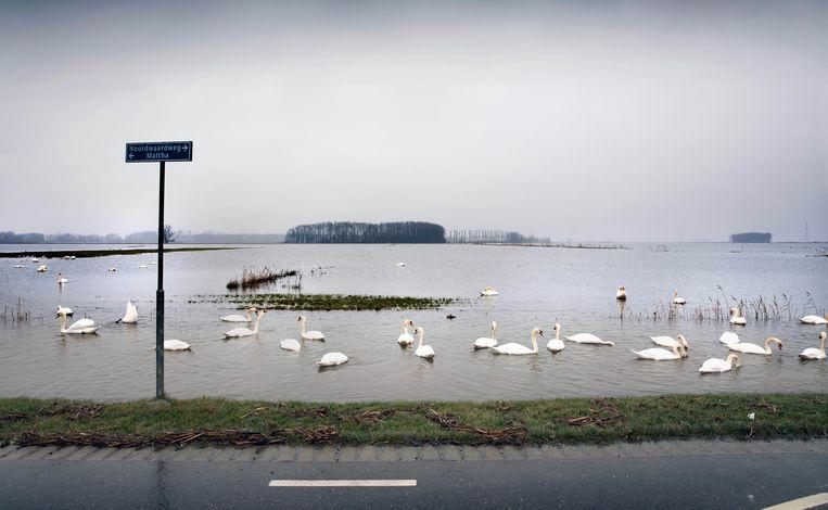 Polder Noordwaard (Werkendam). Ook hier ruimte voor de rivier. Beeld Werry Crone