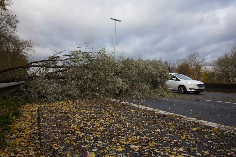 Een boom op de E40 in Erembodegem. Over een afstand van 10 kilometer kwamen verschillende bomen op de snelweg terecht.