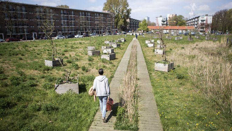 Het Jan van Schaffelaarplantsoen in Amsterdam. Hier gaat het Brits-Amerikaanse CBRE 250 huurwoningen bouwen. Beeld Julius Schrank
