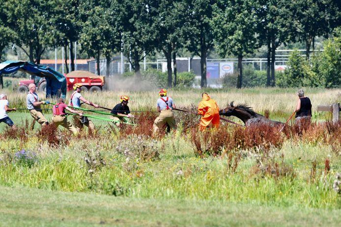 Brandweerlieden redden een paard uit de sloot in Leerdam.