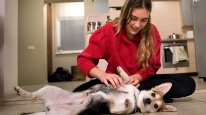 VIDEO. Tinder voor honden: dierenliefde op het eerste gezicht