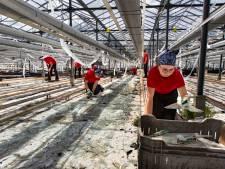 Van Gog bouwt voor 100 arbeidsmigranten: Nieuw pand op locatie Waardjesweg in Heusden