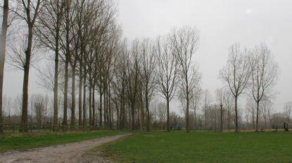 Groen Gooik wil lindebos op oude sportterreinen aanplanten