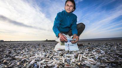 Tel 100 schelpjes aan onze kust