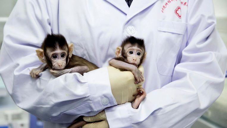De twee aapjes in de armen van een medewerker van de Chinese Academie voor Wetenschappen. Beeld null
