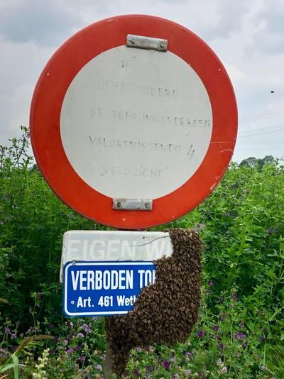 Bijen houden zich keurig aan de verkeersregels in Rilland