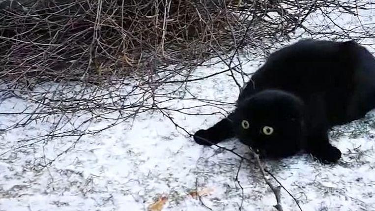 Kat loopt voor het eerst in de sneeuw en weet niet waar hij het heeft