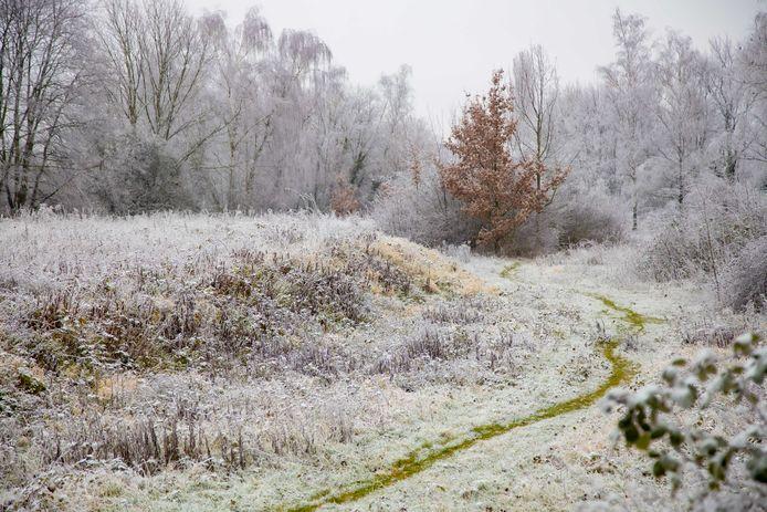Het wordt de komende dagen koud, met op veel plaatsen nevel en aanvriezende mist.