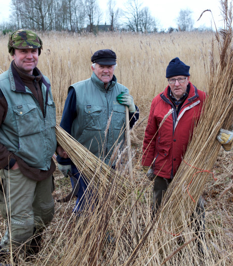 Van Zanten houdt al 60 jaar de Kockengense rietvelden in stand