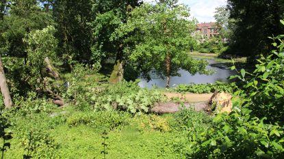 Sprookjesbos uitgesteld: omgevallen boom aan ingang verspert doorgang Liedtspark