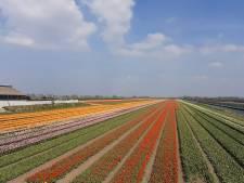 Fietsen tussen de tulpen