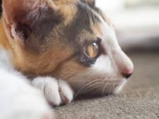 'Help de katten van Fort Oranje, laat ze niet bevriezen!'