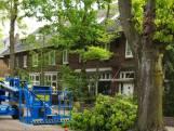 Opnieuw opschudding om snoeiwerk in Oss: 'onveilige' bomen aan Ridderstraat ingekort