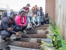 Afrikaanse landbouwers in Zeeland: 'Wat zijn de Zeeuwse boeren blij!'