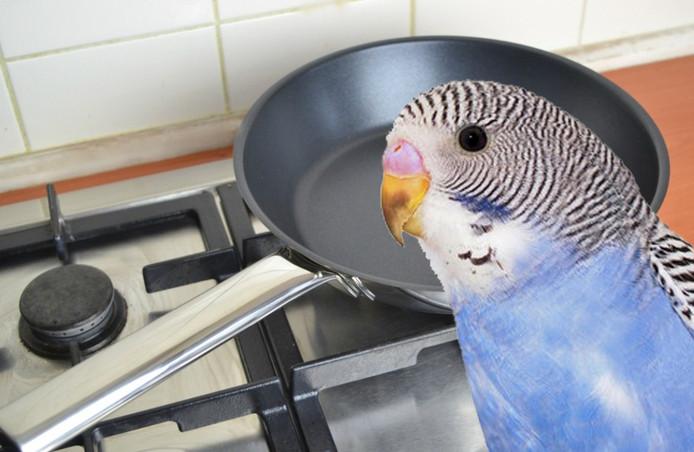 Vogelliefhebbers opgelet: bij het eerste gebruik van een pan met een teflonlaag moeten vogeltjes niet in de keuken komen.