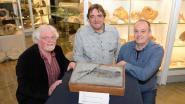 100 miljoen jaar oud haaienskelet na storm blootgelegd op strand