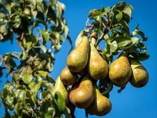 Fruittelers Kromme Rijnstreek rekenen wél op goede oost