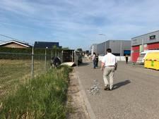 Koeien verruilen weiland voor bedrijventerrein in Elburg