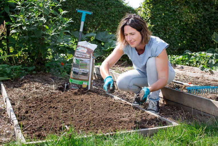 De zomer was hard voor je tuin, maar de herfst kan veel goedmaken. Hoe wis je de sporen van de droogte uit? Snoei wat verdord is weg, pep je planten op en trek bloemen weer op gang.