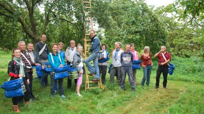 Plukteam Pajot & Zenne leert vrijwilligers fruit plukken (en dat is niet zo eenvoudig als het lijkt)
