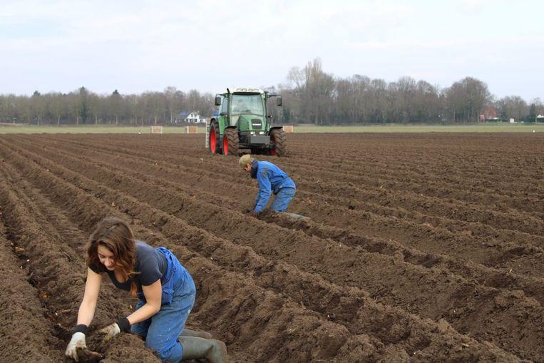 Corine Ermers aan het werk op het land. Beeld