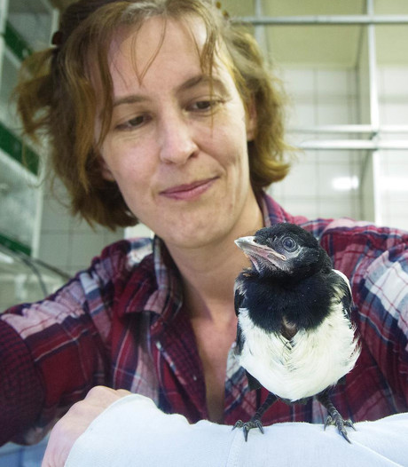 Vogels slachtoffer door gebrek aan opvang
