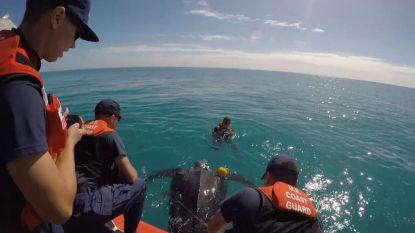 Kustwacht en lokaal dierenziekenhuis van Florida werken samen om schildpad te redden uit benarde situatie