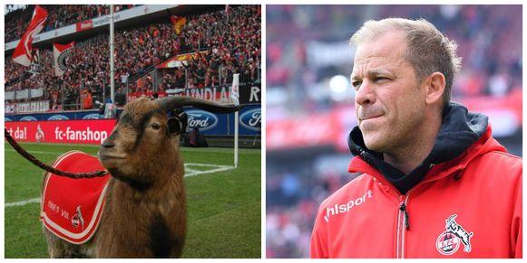Links clubmascotte Hennes VIII, rechts Markus Anfang, de coach die eind april ondanks de nakende promotie werd ontslagen.