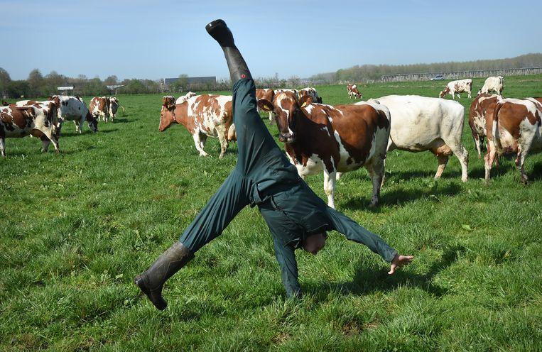 De koeien weer naar buiten en de biologische boer is er maar wat blij mee. Beeld Marcel van den Bergh
