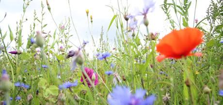 Bloemen voor de bijen in Etten-Leur