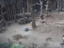 Olifant Yuhna (3) overleden in Dierenpark Amersfoort