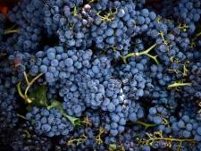 Un viticulteur décède suite à une chute dans une cuve à vin