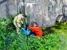 Applaus voor brandweermannen na redden katje uit water