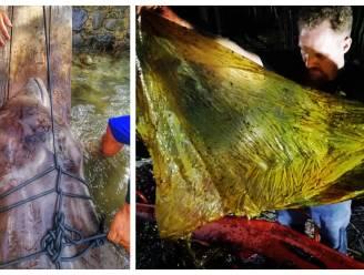 """""""Walgelijk"""": walvis spoelt aan met liefst 40 kilo (!) aan plastic zakken in zijn maag"""