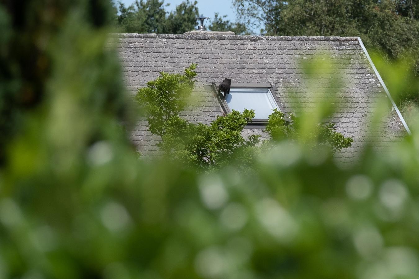 Kuifmakaakaapje Rojo wist te ontsnappen uit Dierenpark Planckendael