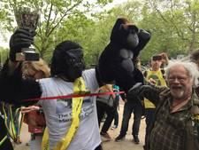 Mister Gorilla kruipt in zes dagen de marathon van Londen