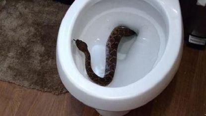 Jongen vindt ratelslang in toiletpot. Maar het ergste moet dan nog komen