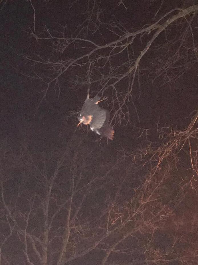 Een verstrikt geraakte reiger bungelt in een boom. De vogel raakte dusdanig gewond, dat het een spuitje kreeg.