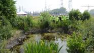 Kamsalamander floreert in Bazel